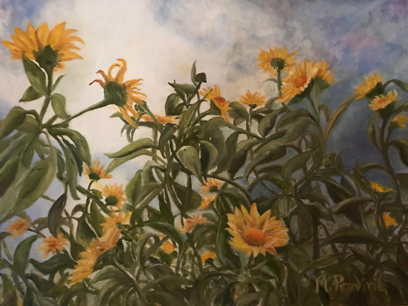 Sunflowers at DBG